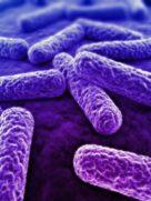 Eats_Bacteria_pg3-2