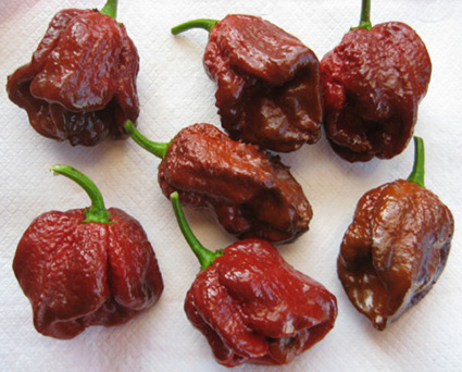 hottest pepper in the world