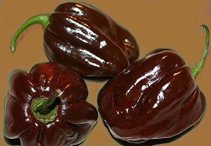 hottest peppers