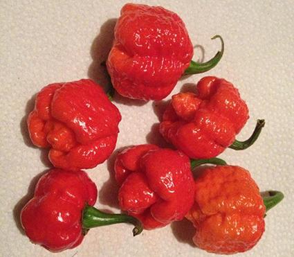 hottest pepper