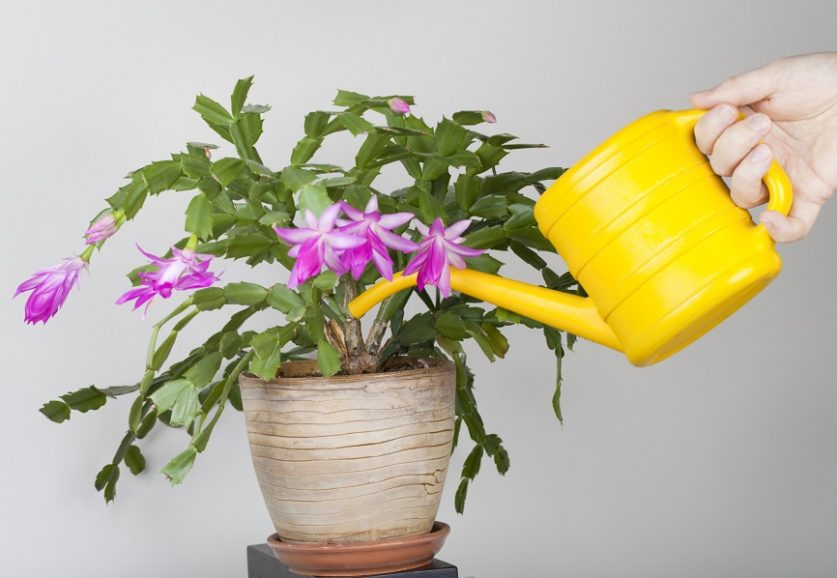 5 easy-to-care-for houseplants for people terrible with houseplants